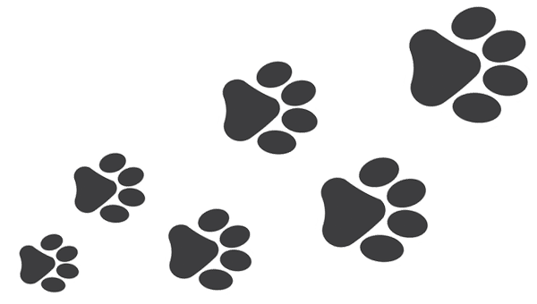 An illustration of various footsteps of a dog